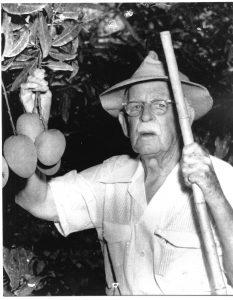 David Fairchild Picking Mangos