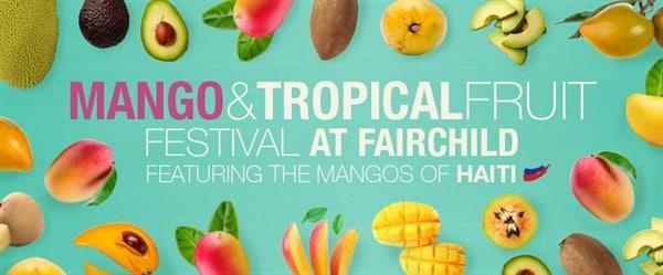 Mango Summer Fun - Fairchild