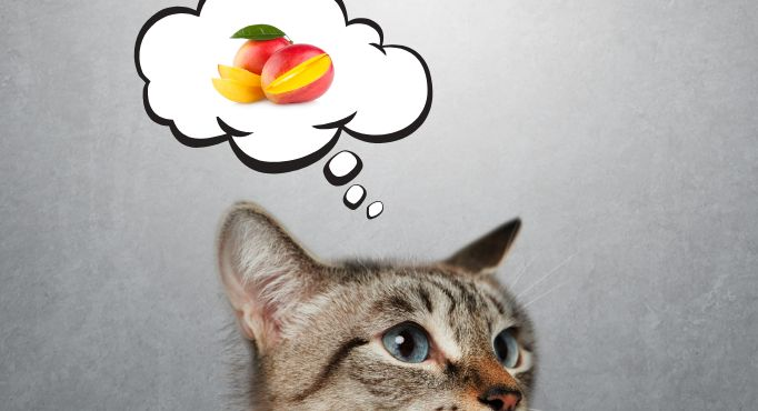 Can cats or dogs eat mangos? A cat thinking about mangos