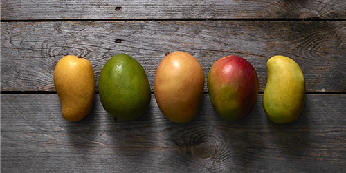 When are mangos in season? Red, orange, yellow and green mangos laying in a row on a wood backdrop