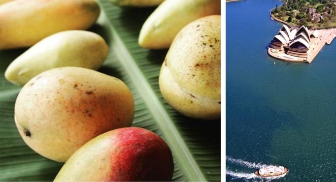 Australian Mango & Sydney Harbor