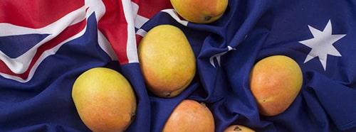 Australian Mango - Mangos on top of an Australian flag