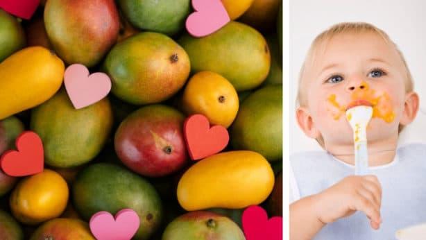 Can babies eat mango 1