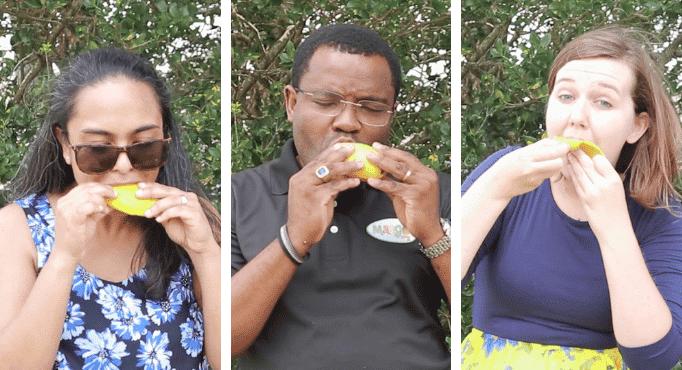 Eat a Mango - Header