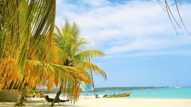 Mangos in Jamaica - Beach
