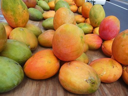 Mangos in Jamaica - Julie Mangos